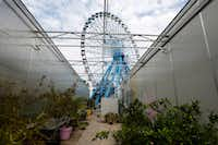 The Ferris wheel is seen from the greenhouse at Big Tex Urban Farms.(Nathan Hunsinger/Staff Photographer)