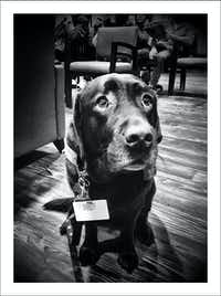 12/12/16 — Therapy dog in the chemotherapy waiting room.(Guy Reynolds/Staff Photographer)