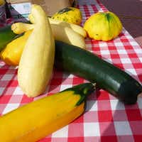 Seasonal squash, including zucchini, yellow zucchini, sunburst and yellow straight-neck, is available from the Alford Family Farm from Emory, at Coppell Farmers Market. (Kim Pierce/Special Contributor)