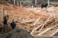A search dog stood atop wreckage after emergency workers attempted to rescue people trapped under a three-story structure that collapsed at the 2600 block of Borger Street in Dallas on Monday.(Shaban Athuman/Staff Photographer)