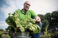 Horticulturalist Daniel Cunningham harvests some Swiss chard. (Gabe Saldana/Texas A&M AgriLife)