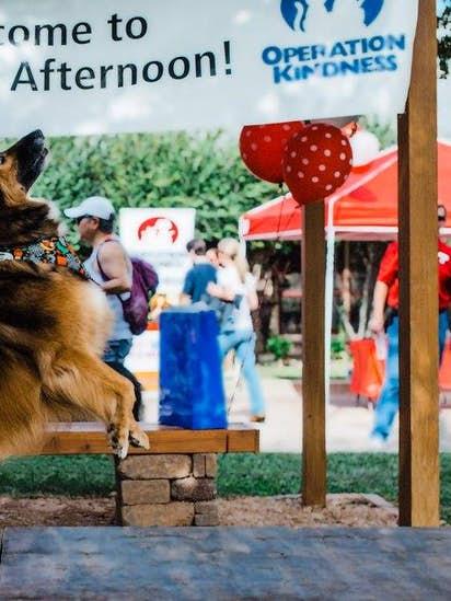 Dog About Town: Try out those costumes this weekend | Pets | Dallas News