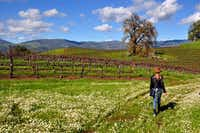 "<p><span style=""font-size: 1em; background-color: transparent;"">A 3-mile hike leads past vineyards at Jordan Vineyard & Winery near Healdsburg in California's Sonoma County.</span></p>(Special Contributor/Katherine Rodeghier)"