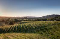 Quivira Vineyards is committed to biodynamic farming, closely monitoring the soil to ensure it contains healthy microbiotic life.(Quivira Vineyards)