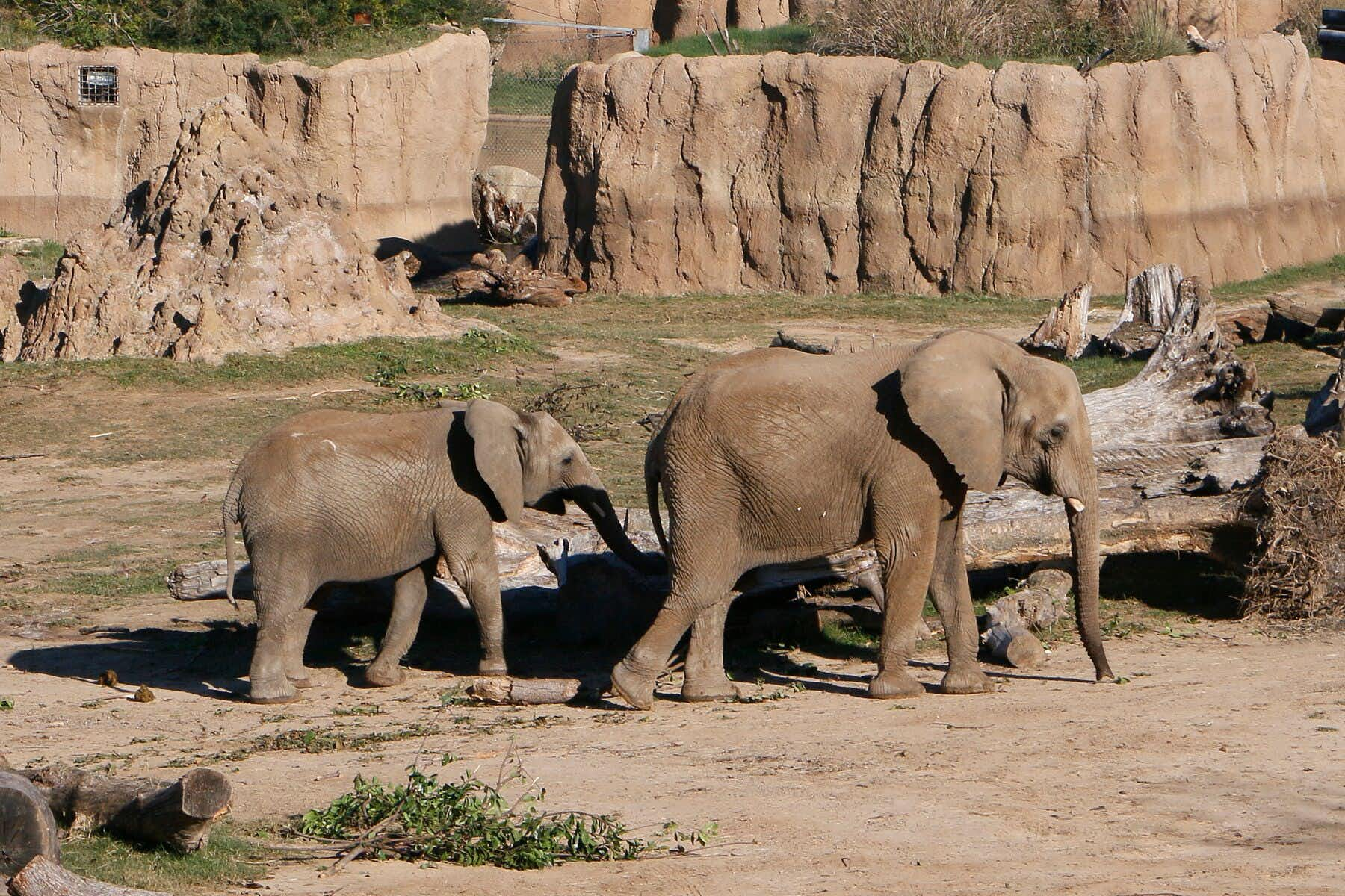 Dallas Zoo relocates mother-daughter elephant pair to California