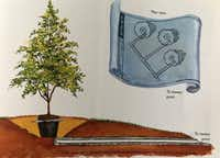 Illustration from <i>Texas Gardening the Natural Way</i> shows how PVC pipe can be used near a tree for better drainage.(Howard Garrett/Special Contributor)