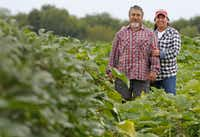 Roy and Sofia Martinez own Rae Lili Farm.(Louis DeLuca/Staff Photographer)