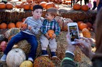 Wyatt Killion, 4, makes a silly face as his grandmother photographs him and his 1-year-old brother, Ty, during their trip to the Pumpkin Village during Autumn at the Arboretum on Oct. 23, 2018.(Ben Torres/Special Contributor)