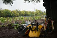 Gardening tools are stacked against a tree at the Dallas County building in Garland. The garden currently has 13 fruit trees, which includes apple trees, plum trees and peach trees.(Daniel Carde/Staff Photographer)
