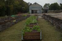 More than 80 raised beds will be used for vegetable research.(Daniel Carde/Staff Photographer)