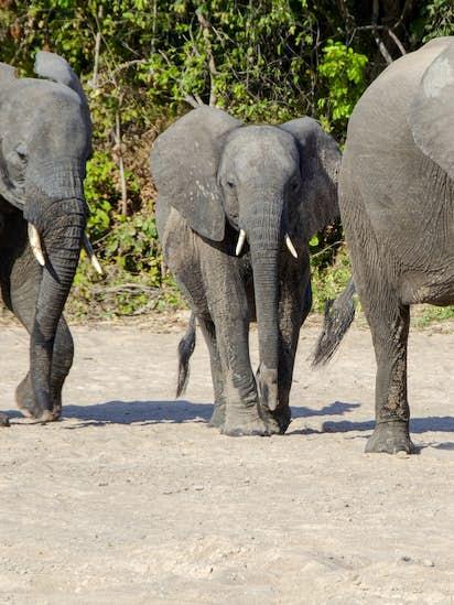 Take a walking safari in Zambia's Luangwa Valley | Travel