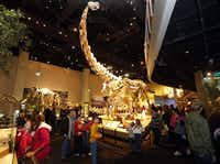 Crowds look up at an Alamosaurus in the dinosaur exhibit at the Perot Museum of Nature and Science. (2013 File Photo/Staff)