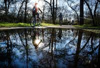 After overnight rains, cyclists and walkers navigate the water puddles along the paths of River Legacy Park in Arlington.(Tom Fox/Staff Photographer)