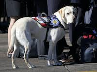 President George H.W Bush's service dog Sully stands with members of the Bush family during a departure ceremony at Ellington Field in Houston on Dec. 3.(Getty Images)