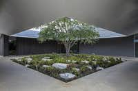 East Courtyard of the Louisa Stude Sarofim Building housing the Menil Drawing Institute, at The Menil Collection in Houston. Johnston Marklee, architects; Michael Van Valkenburgh Associates, landscape architects(Richard Barnes/The Menil Collection)