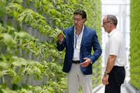 In June 2018, Eden Green Technology co-chair Jaco Booyens and co founder Eric Schick checked the bok choy at the company's vertical farm in Cleburne.(Brandon Wade/The Associated Press)