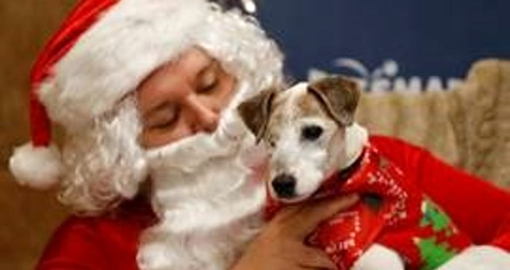 Dog About Town: Stepping out in holiday sweaters and more