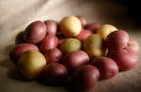 Potatoes, now ubiquitous, can be traced back to one country on Earth.(Vernon Bryant/Staff Photographer)