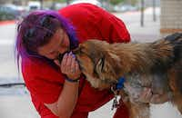 Kelly Lindstrom, a vet technician and animal cruelty investigator, kisses rescue dog Lt. Dan at Pet Vet in Frisco in this 2017 file photo. Lt. Dan was found by a rescue group after being shot in the shoulder, a wound that necessitated amputation. (Jae S. Lee/Staff Photographer)