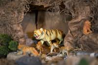 Toy tigers are part of a Nativity scene built by Carmen Meza in her home. (Daniel Carde/Staff Photographer)