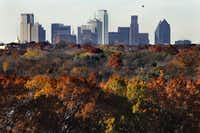 The Dallas skyline rises above the fall foliage appearing in an array of colors around White Rock Lake in Dallas, Wednesday, November 28.(Tom Fox/Staff Photographer)