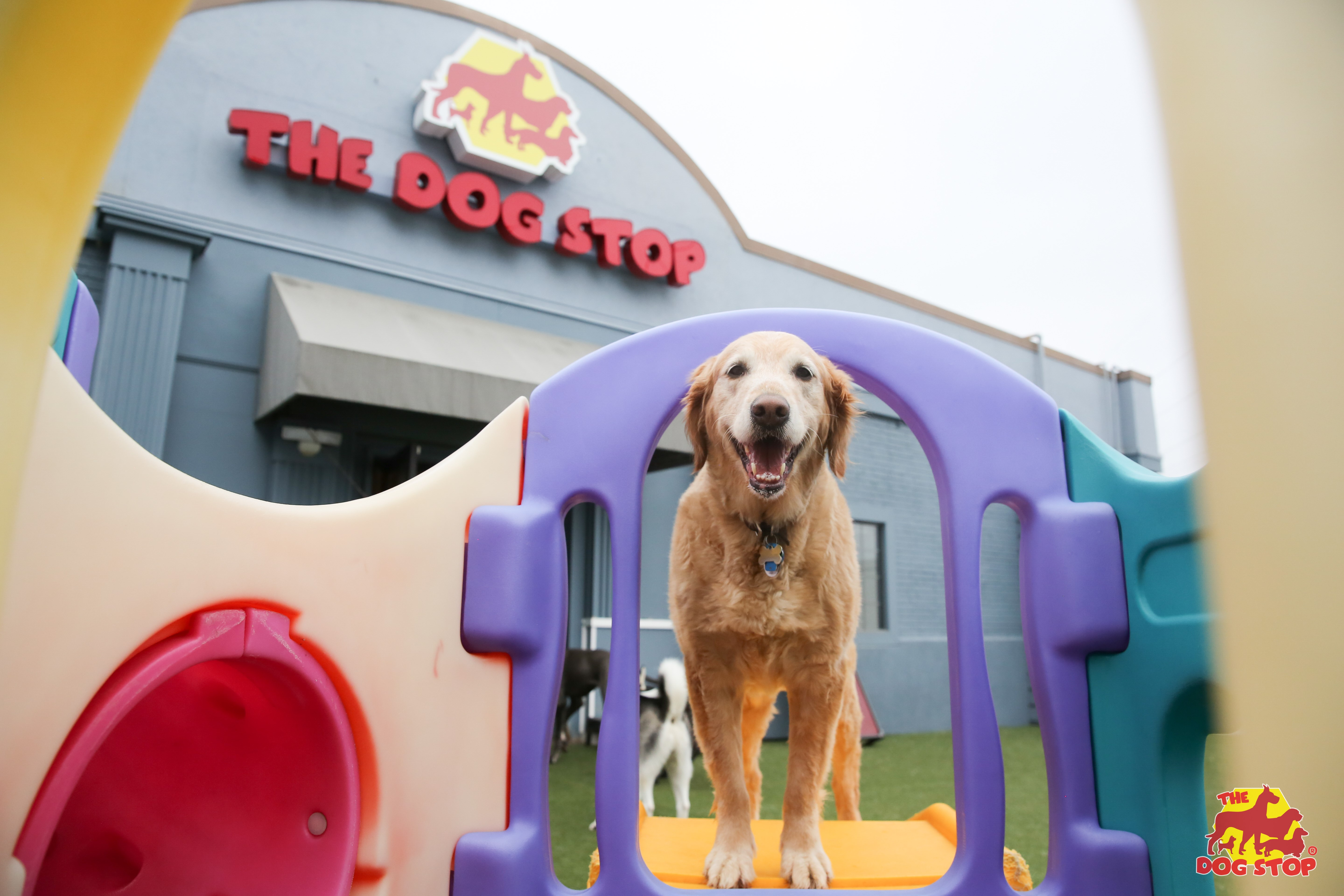 f42a6e06474 Dog About Town: Checking out new spots and more things to do | Pets |  Dallas News