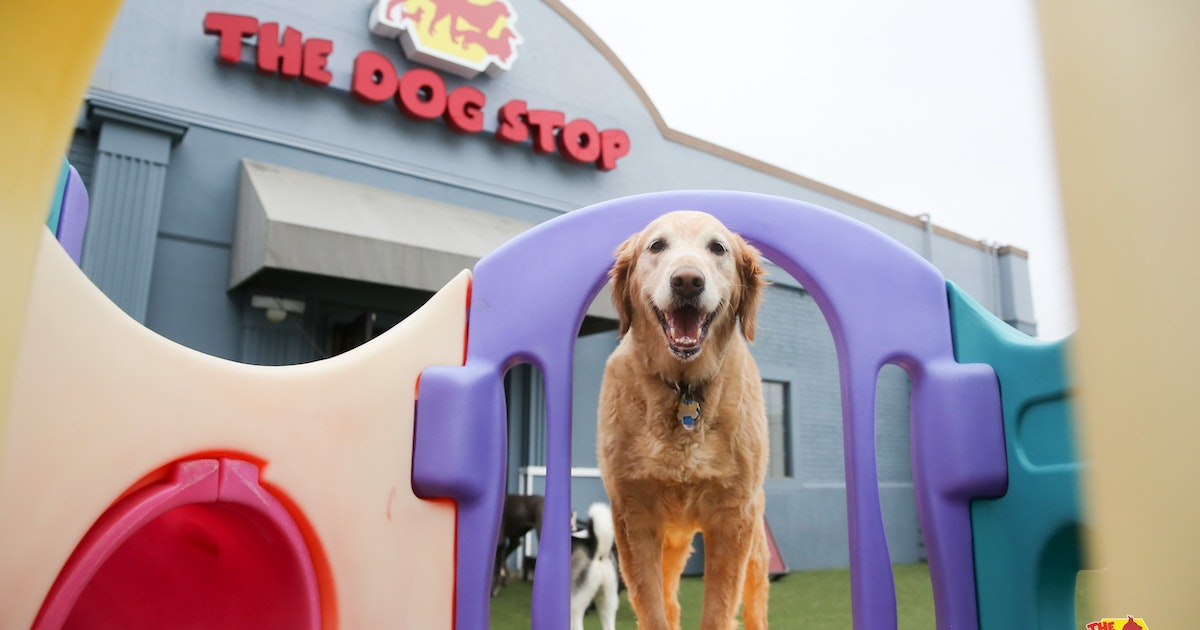 Dog About Town: Checking out new spots and more things to do | Pets