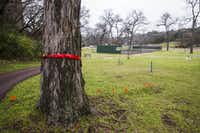 Trees marked with red ribbons are scheduled to be cut down if Methodist Dallas Medical Center wins City Council approval for its new Folsom Wellness Center.(Ashley Landis/Staff Photographer)