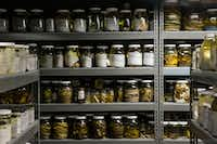 """Reptiles are preserved in jars of ethanol at the University of Texas at Arlington's Amphibian and Reptile Diversity Research Center. The newly named <i>Cenaspis aenigma</i>, which translates to """"mystery dinner snake,"""" is preserved the same way.(Daniel Carde/Staff Photographer)"""