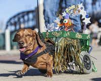 The Krewe of Barkus & Meoux pet parade is always a favorite for kids.(Jim Noetzel)