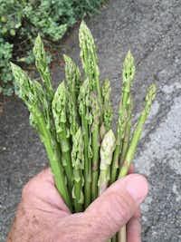 Asparagus spears(Howard Garrett/Special Contributor)