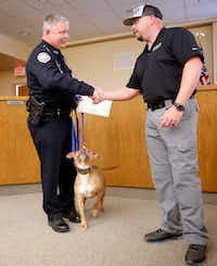 City of Barling (Ark.) police Officer Don Rowe (left) is congratulated by Sector K9 operator Wes Keeling after he and Hype, his new canine police pit bull, graduated from the Midlothian-based police canine training group at Ferris ISD auditorium in Ferris. <br>(Tom Fox/Staff Photographer)