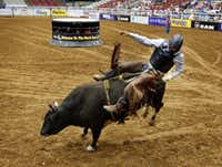 Bull rider McKennon Wimberly fails to last eight seconds on his bull at the Mesquite Rodeo on June 6, 2014.(Michael Ainsworth/Staff Photographer)
