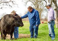 Chris Shepherd, chef/owner of Underbelly Hospitality, visits 44 Farms, where the majority of his beef is raised.(Nuray Taylor)