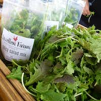 Lewellen Farms of McKinney grows salad greens and microgreens, and will be selling this season for the first time at White Rock Farmers Market.(Kim Pierce/Special Contributor)