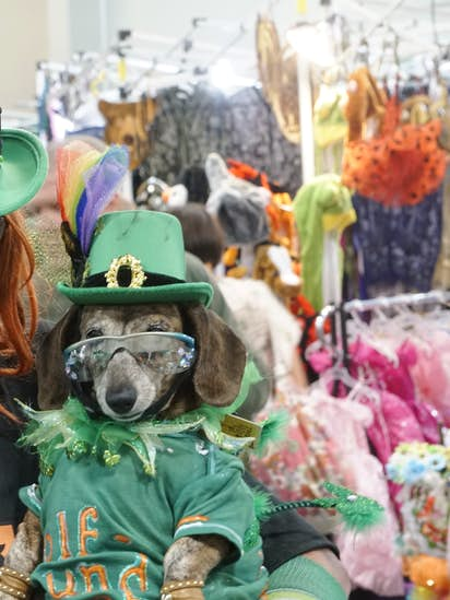 c232e4421397dc Dog About Town: Raising a glass to the Irish and more things to do ...