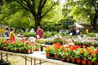 Bring a wagon and celebrate spring during the Fort Worth Botanic Garden spring plant sale March 29 and 30.(Fort Worth Botanic Garden)