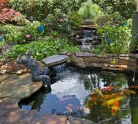 The North Texas Water Garden Society Pond Tour offers day and evening excursions to ponds filled with koi, goldfish and aquatic plants.(Kimberly Atchley/North Texas Water Garden Society)