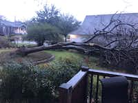 A fallen tree from overnight storms  on Neches Street in Oak Cliff on Wednesday.(Elena Christiansen)
