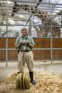 Richard Cohen, 77, has volunteered at the Dallas Zoo since 2003, when he retired from the Dallas VA Medical Center. He works with giraffes, hippos and gorillas. (Smiley N. Pool/Staff Photographer)
