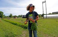 James Hunter works in the the We Over Me farm at Paul Quinn College in Dallas.(2017 File Photo/Staff)