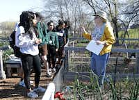 Volunteer Rebecca Brady tours the community gardens with a group of students at the Plano Environmental Education Center in Plano.(Jason Janik/Special Contributor)
