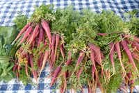 Demases Farm in Boyd had plenty of tender carrots, including this Aggie-created maroon variety, at White Rock Farmers Market.(Kim Pierce/Special Contributor)