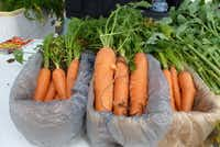 Still Waters Family Farm brought big, fat carrots from Bluff Dale, along with lettuce and turnips, to the Cowtown Farmers Market in Fort Worth. They sold out of beets.(Kim Pierce/Special Contributor)