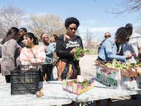 Attendees of the Soul of Dallas Bus tour visit the Oak Cliff Veggie Project in Dallas, Saturday, March 16 2019. Each third Saturday of the month This initiative provides fresh vegetables to the community free of charge.(Clarence Hodrick III/Special Contributor)