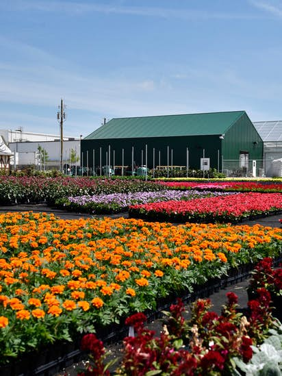 The Dallas Arboretum Opens A Giant New Greenhouse So It Can Grow Its Own Plants