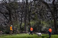 City of Dallas inspectors, along with a neighborhood dog, survey the mountain of shingles at Blue Star Recycling that rises over the backyard of  Marsha Jackson's home off South Central Expressway on Wednesday, March 6, 2019, in Dallas. (Smiley N. Pool/The Dallas Morning News)(Smiley N. Pool/Staff Photographer)