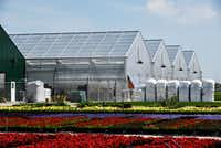 Flower beds that have been moved outside after growing inside the Dallas Arboretum's newest greenhouse, The Tom and Phyllis McCasland Horticulture Center.(Ben Torres/Special Contributor)