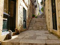 Cats are in abundance throughout the narrow pedestrian-only streets of Dubrovnik's walled Old Town.(Travis Pinson/Special Contributor)