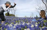 Kat Webb takes a photo of her daughter, Kaley Webb, 11, of Carrollton in a field of bluebonnets near Zion cemetery in Frisco, Texas on Monday, April 15, 2019. Webb has photographed her daughter in various bluebonnets for the past 10 years.(Vernon Bryant/Staff Photographer)